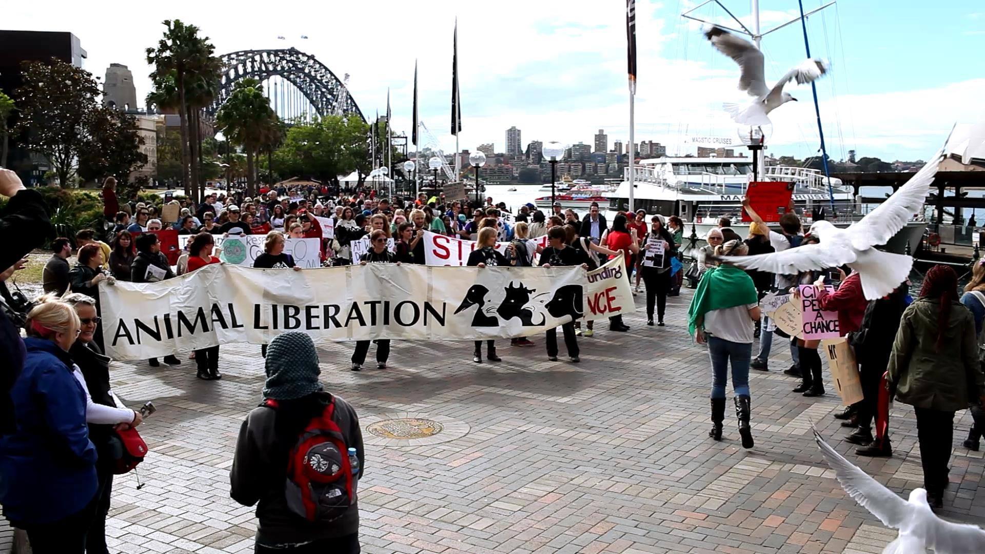 Marche pour la fermeture des abattoirs à Sydney